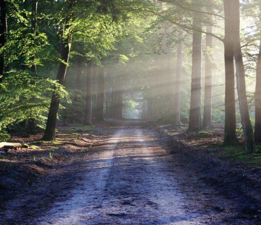 Weg door bos