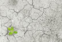plantje in uitgedroogde bodem