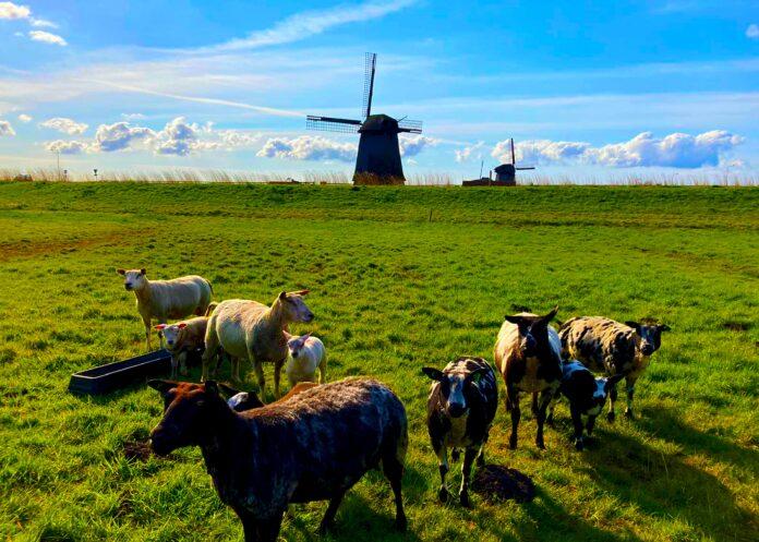 Nederland. Foto: Meins Coetsier
